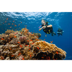 潜水呼吸调节器 DIN头平衡型- 进阶系列